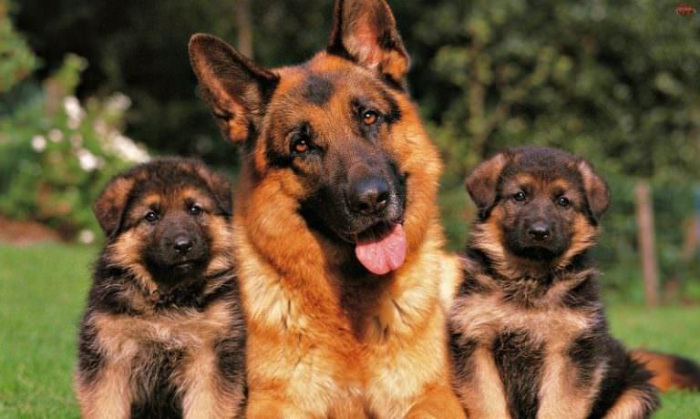 Kutya szeme piros, kipirult - mit kell tenni ilyenkor? | Lőrinci Állatorvosi Rendelő